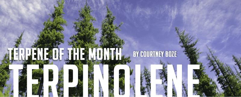 Terpene of the Month: Terpinolene