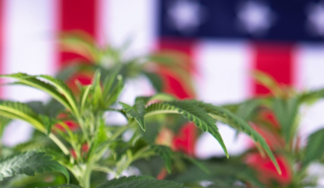 An Open Letter To Dispensary Owners From An Army Veteran & Medical Cannabis Patient