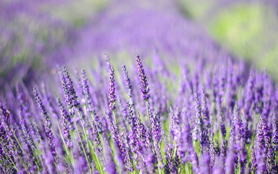 Terpene of the Month: Linalool