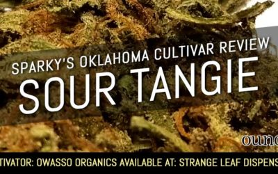Sour Tangie – Sparky's Oklahoma Cultivar Review (SEE PHOTOS)